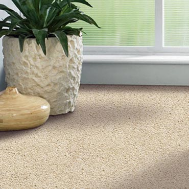 Shaw Carpet Ballera Collection | Warrenville, IL